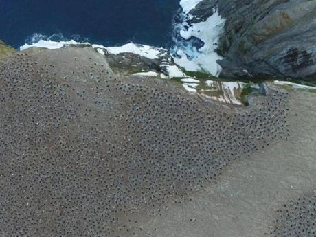 An aerial view of an Adélie penguin breeding colony on Heroina Island in the Danger Islands.